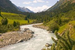 Mountain river. In green gorge Stock Photo