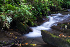 Mountain river. Is running down in summer forest royalty free stock photo