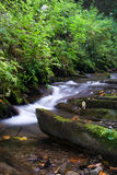 Mountain river. Is running down in summer forest royalty free stock photos