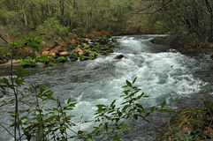 Mountain river. An mountain fast river. Natural reserve. Protected area. Spain Royalty Free Stock Photo