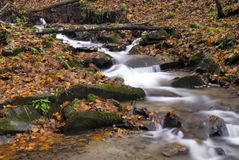 Mountain river. Is running down in autumnal forest Royalty Free Stock Photography
