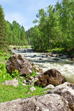 The mountain river Royalty Free Stock Photos