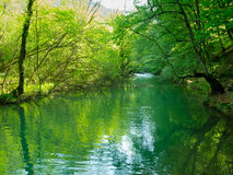 Mountain river. Flowing through the forest in Crimea Stock Photos