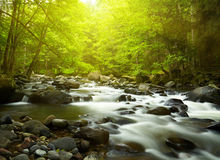 Mountain River. In the wood Stock Photos