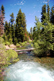 Mountain River. Beautiful image of a mountain river flowing through mountain pine trees under a blue sky Royalty Free Stock Photo