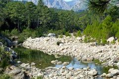 Mountain river. A mountain stream in mountain of  Corsica Stock Photos
