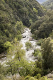 Mountain river. A mountain river in a green valley, Spelunca valley, Corsica Stock Photo