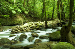 Mountain river. In tropical deep forest royalty free stock image