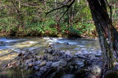 Mountain river. Great smoky mountain park Royalty Free Stock Photo