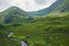 Mountain river among the alpine fields stock image
