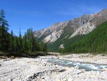 Mountain river. In Altai mountains, Russia, Siberia Royalty Free Stock Photos