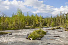 Mountain river. Altai. Russia Royalty Free Stock Images
