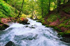 Mountain river in autumn colorful forest. stock images