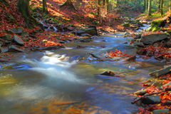 Mountain river. In autumn with colorfull leaves. Beskid SÄ…decki, Poland royalty free stock images