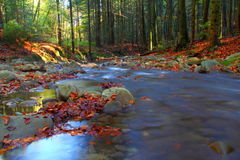 Mountain river in autumn. With colorfull leaves. Beskid Sądecki, Poland Royalty Free Stock Photo