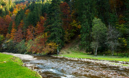 Mountain river in autumn. Stock Photo