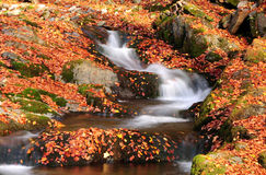 Mountain river in autumn forest. Montain stream in fallen leaves shot with slow shutter speed Royalty Free Stock Image