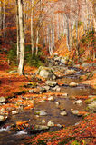 Mountain river in autumn forest Royalty Free Stock Photo