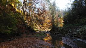 The mountain river in autumn forest at amazing sunny day stock video footage