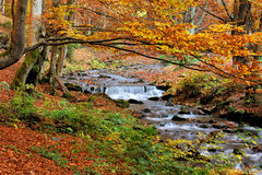 Mountain river in the autumn forest Stock Image