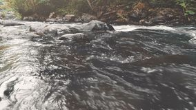 Mountain river in autumn forest. Water close-up. Mountain river in autumn pine tree forest. Water Slow Motion flows through massive boulders. Nature, travel stock video footage