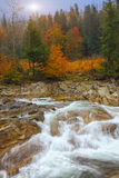 Mountain river in autumn at sunrise. Rocky shore. Multi-colour wood Stock Images