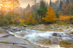 Mountain river in autumn at sunset. Mountain stream in autumn at sunset. multi-color wood Royalty Free Stock Photo