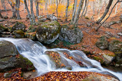 Mountain river in autumn time Royalty Free Stock Image