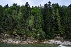 Mountain river in the background of a cliff with a forest stock photography
