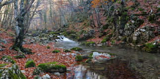 The mountain river in beechen autumn wood Stock Photos