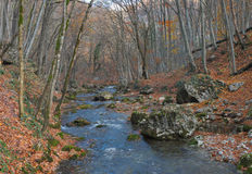 The mountain river in beechen autumn wood Royalty Free Stock Images