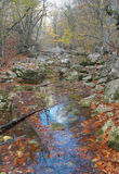 The mountain river in beechen autumn wood Royalty Free Stock Photos