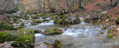 The mountain river in beechen autumn wood Royalty Free Stock Photography