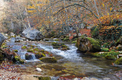 The mountain river in beechen autumn wood Stock Image