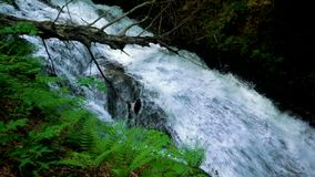 Mountain river with rapids and waterfalls - stream flowing through thick green forest. Stream in dense wood. Mountain river Bistrica wuth rapids and waterfall stock footage
