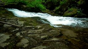 Mountain river with rapids and waterfalls - stream flowing through thick green forest. Stream in dense wood. Mountain river Bistrica wuth rapids and waterfall stock video