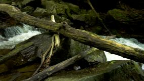 Mountain river with rapids and waterfalls - stream flowing through thick green forest. Stream in dense wood. Mountain river Bistrica wuth rapids and waterfall stock video footage