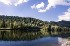Mountain river Biya. Mountain river and dense vegetation along its banks Stock Photos