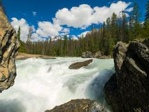 Mountain river in Canada, pristine nature stock images