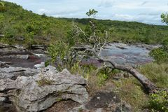 Mountain river Canio Cristales. Colombia Royalty Free Stock Photography