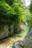 Mountain River in the Canyon with Rocky slopes and green trees royalty free stock image
