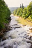 Mountain river in the Carpathians royalty free stock image