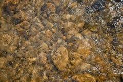 Mountain river in Carpatians Royalty Free Stock Photos