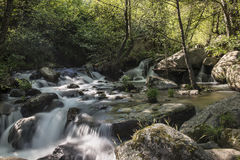 Mountain river with cascades Stock Photography