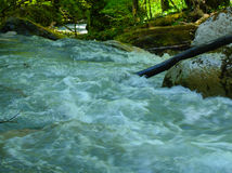 Mountain river in the Caucasus. Rushing mountain river flowing over stones covered with green grass and trees Stock Image