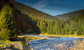 Mountain river coniferous forest. Stock Photos
