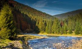 Mountain river coniferous forest. Landscape mountain river with coniferous forest  and meadow in autumn Stock Photos