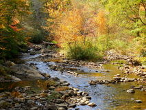 Mountain river creek and forest in fall with reflections Royalty Free Stock Images