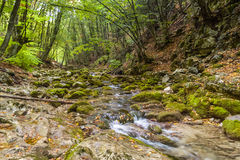 The mountain river in the Crimea Royalty Free Stock Images