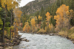 Mountain River in the Fall Royalty Free Stock Photography